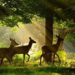 10 Cách chụp ảnh động vật hoang dã