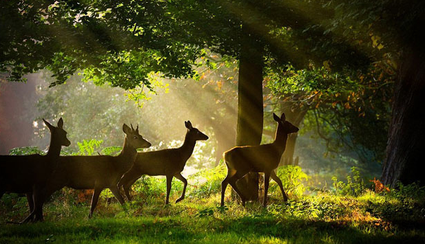 chụp ảnh động vật hoang dã