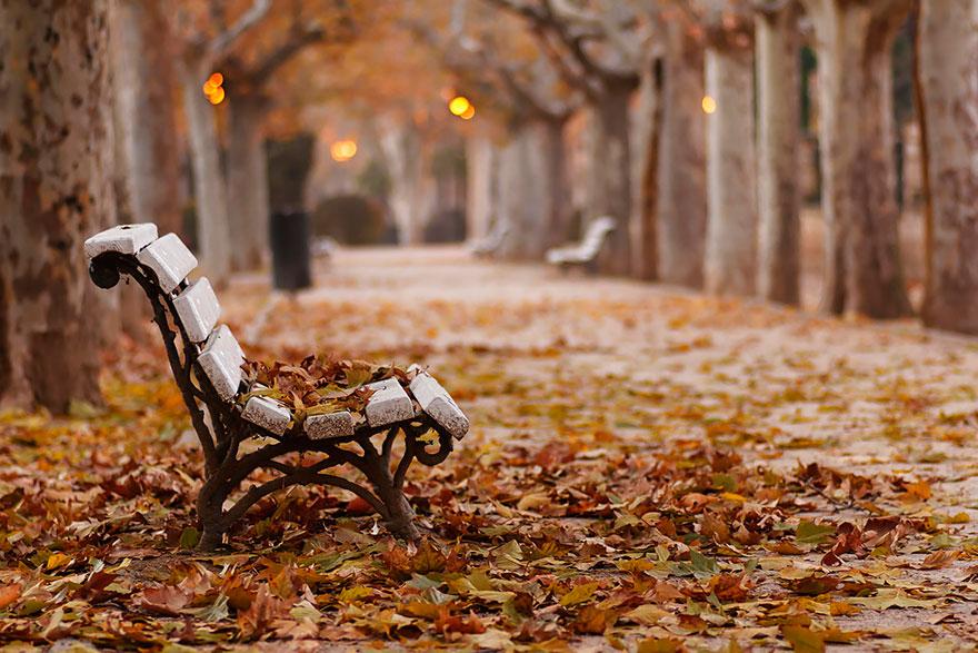 Chụp ảnh mùa thu