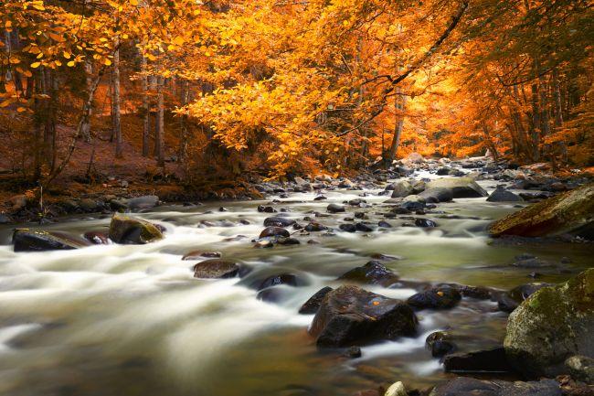 chụp phong cảnh mùa thu