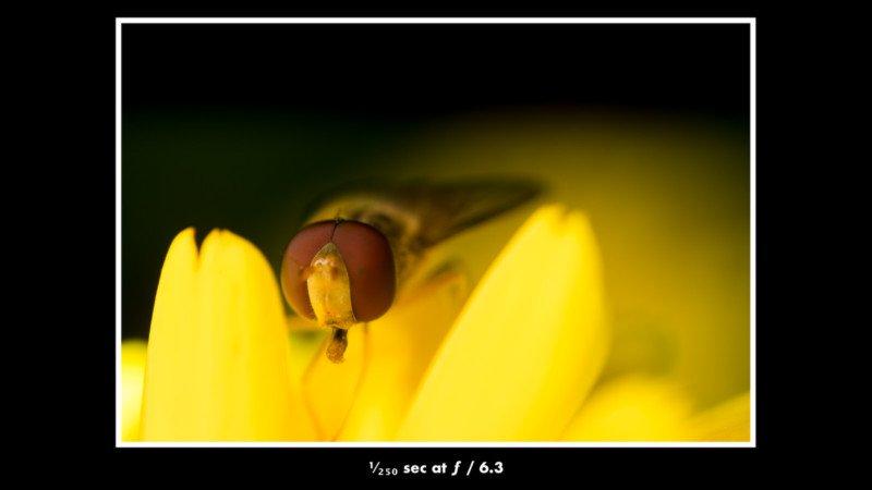 cách chụp côn trùng