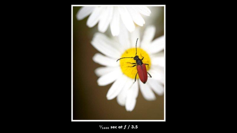 chụp côn trùng