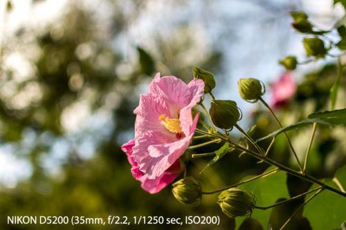 Nikon 35mm F1.8G-3