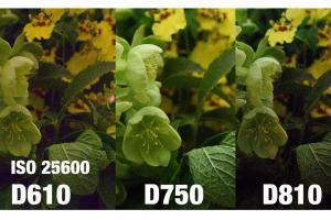 Nikon D810-1