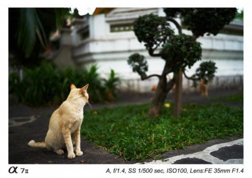 Sony Distagon T FE 35mm f1.4 ZA-1.4 ZA-1