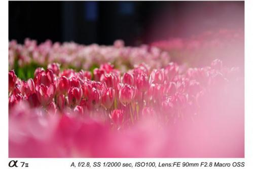 Sony FE 90mm f2.8 Macro G OSS-3